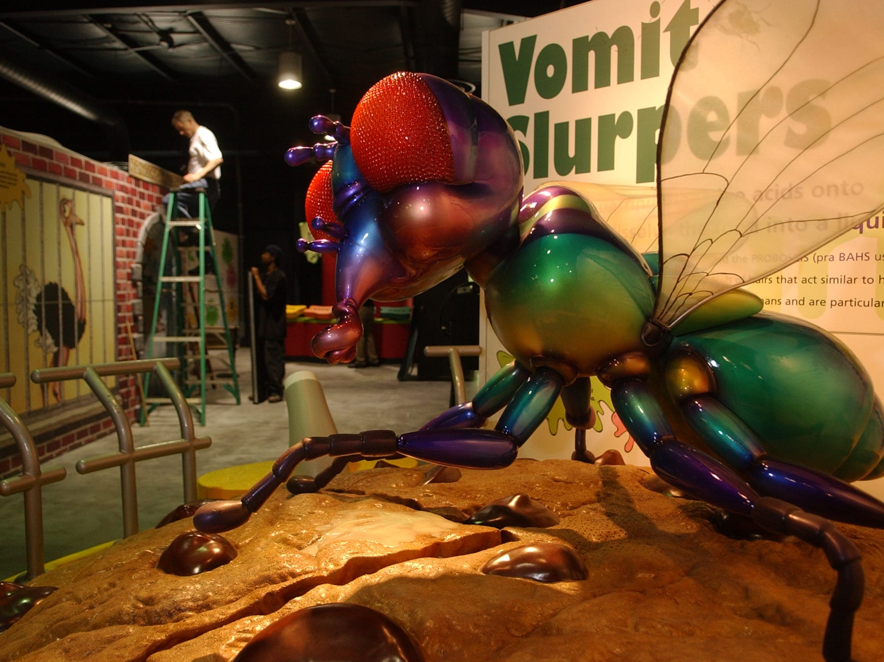 "A.J. Canesi of Advanced Animations works from a ladder while installing Knoxville Zoo's new exhibit Animal Grossology which is being billed as the ""yuckiest exhibit at the zoo."" In the foreground is a giant animated fly on a large chocolate chip cookie who interactively describes his grossest tendencies."
