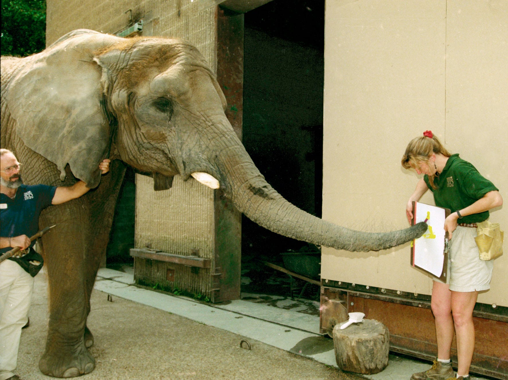 Keeper Deborah Anderson holds paper for elephant artist Mamie, a 36 year-old female pachaderm, at the Knoxville Zoo on August 15, 1997.  Mamie died 3/10/2006.