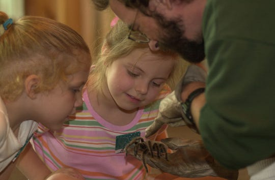 Anna Hoppestad (left) and Ann Legg-Margiotta get an up-close view of a rose hair tarantula at Zoo Knoxville's Animal Tales summer camp in 2001. The zoo holds several camps with age-appropriate activities.