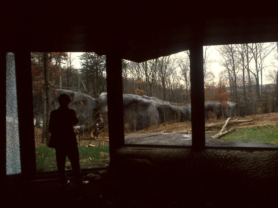 Mary Hivley, the Knoxville Zoo's director of information, looks out on the new gorilla area from one of the viewing areas in March 1994. This area resembles a cave and gives a clear view of the new natural area the animals will live in.