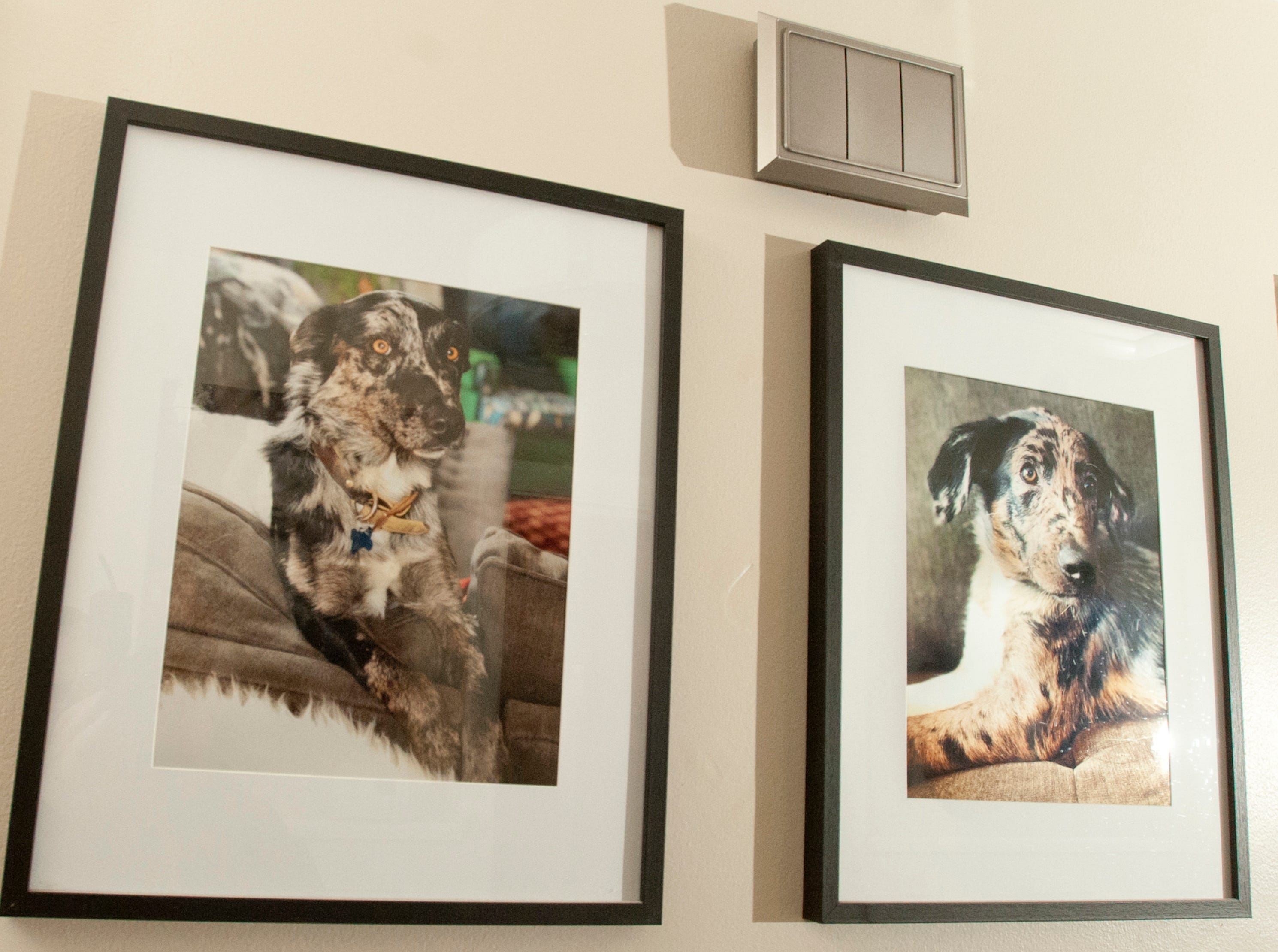 Portraits of Squires' two rescued Katahoula leopard dogs, Sprinkles and Benny, decorate the hallway.