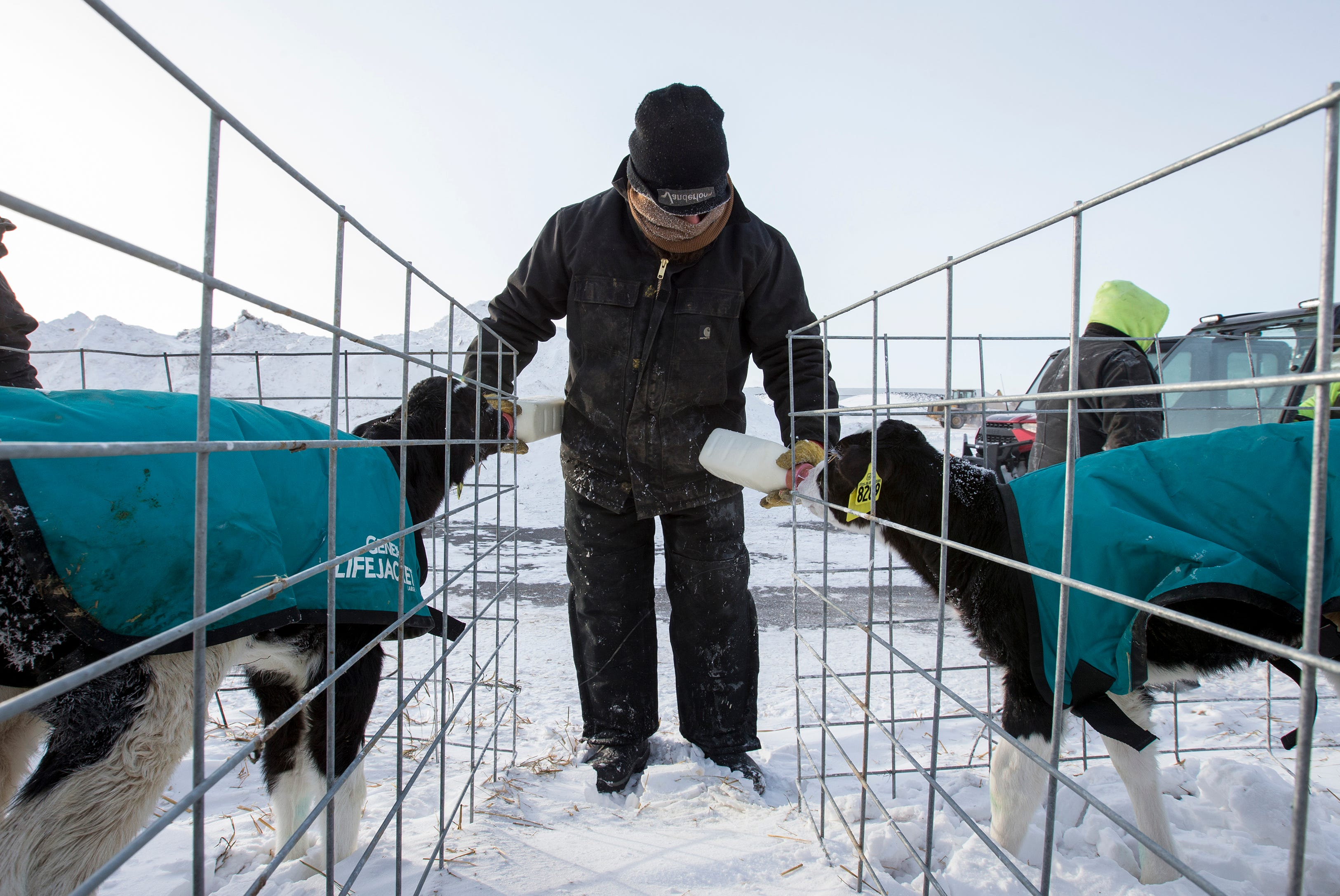 Tom Horn, Lori and Brian's son, feeds two calves whole milk at Hornstead Dairy during a polar vortex Jan. 30 in Brillion.