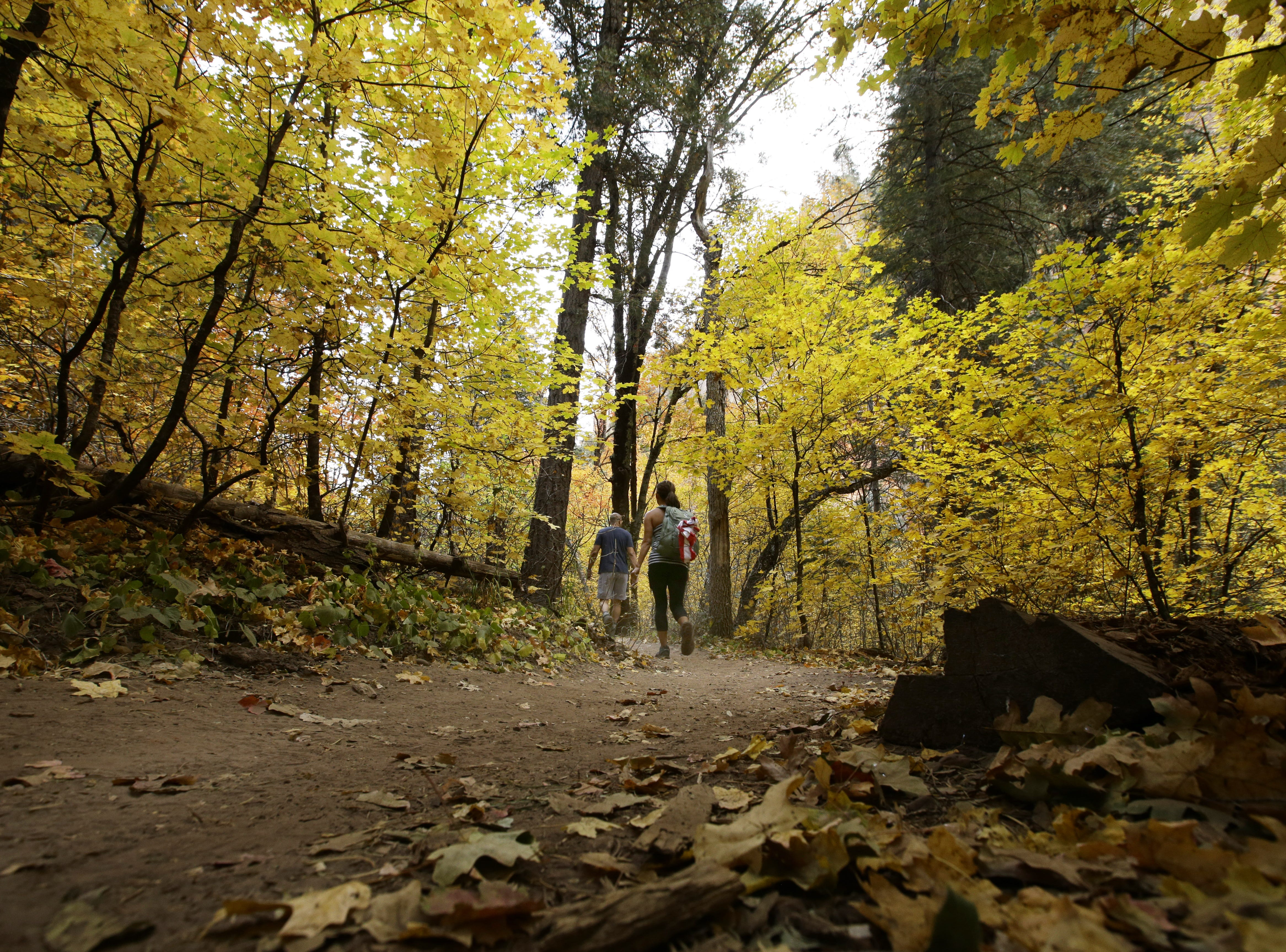 Fall colors descend on the West Fork Trail at Oak Creek Canyon on Oct. 17, 2017 north of Sedona, Ariz.