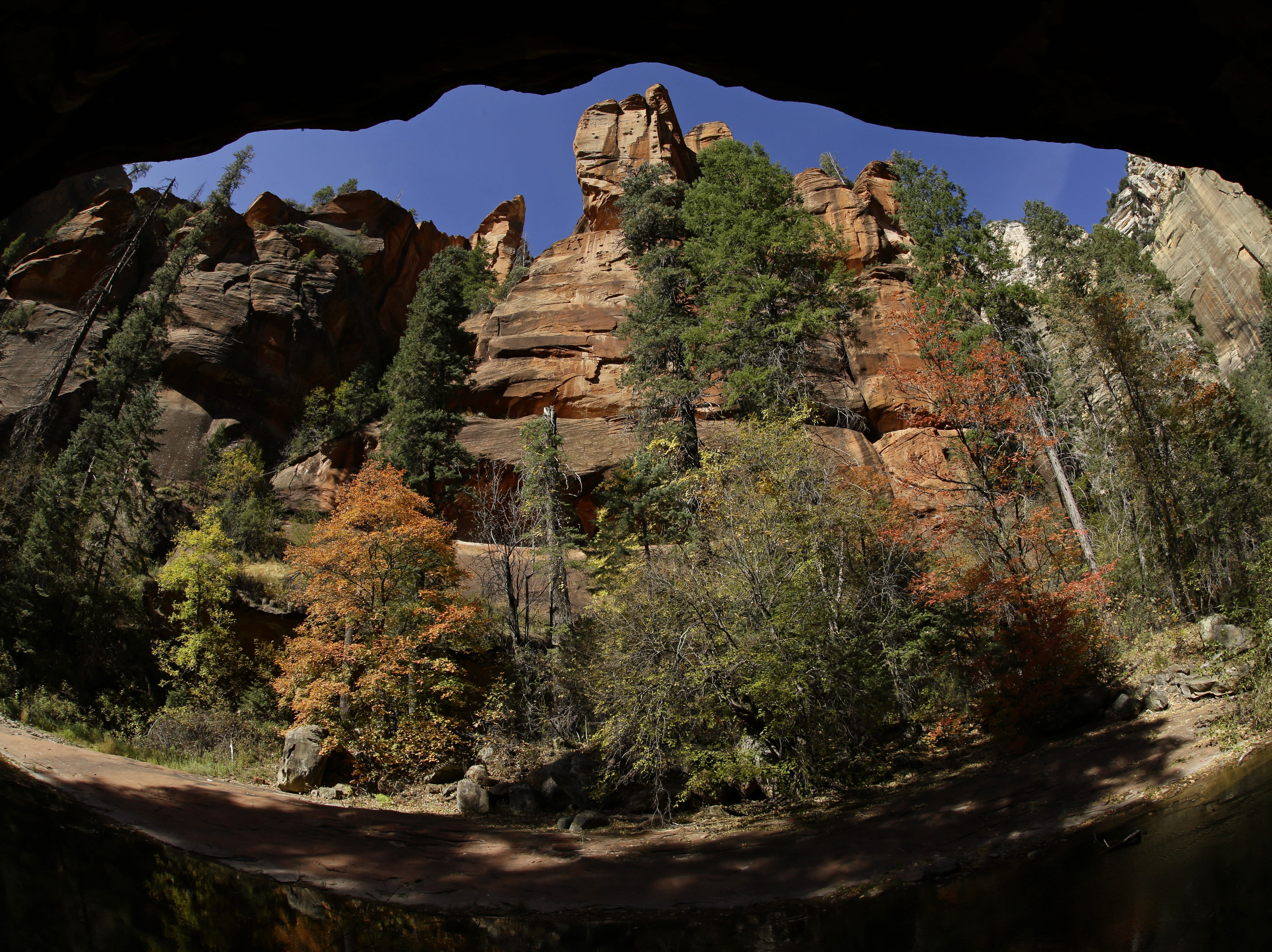 Red rock canyon walls tower above the fall colors on the West Fork Trail at Oak Creek Canyon on Oct. 17, 2017 north of Sedona, Ariz.