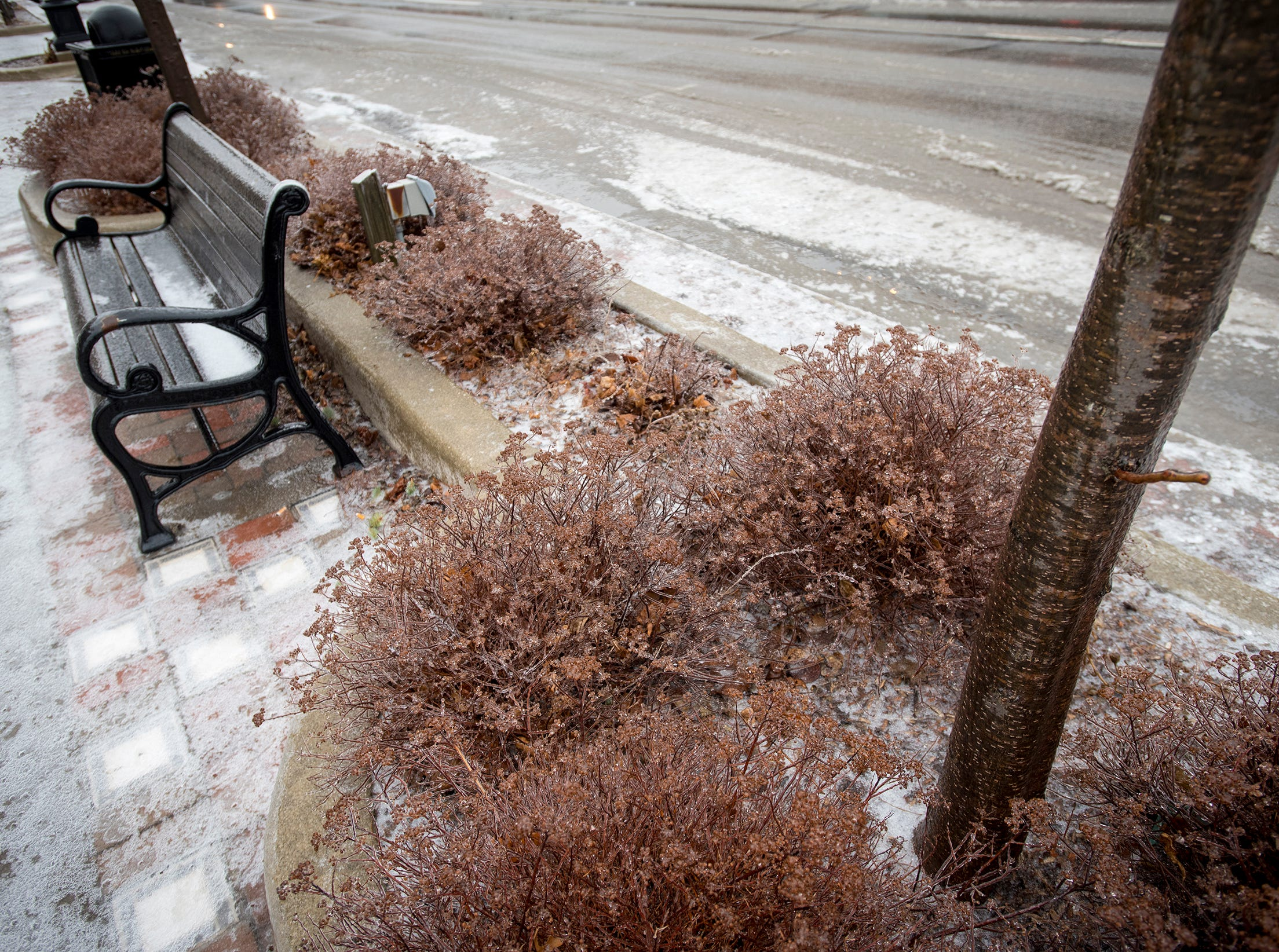 A thin layer of ice coats a bench and some bushes along Military Street in downtown Port Huron Wednesday, Feb. 6, 2019.