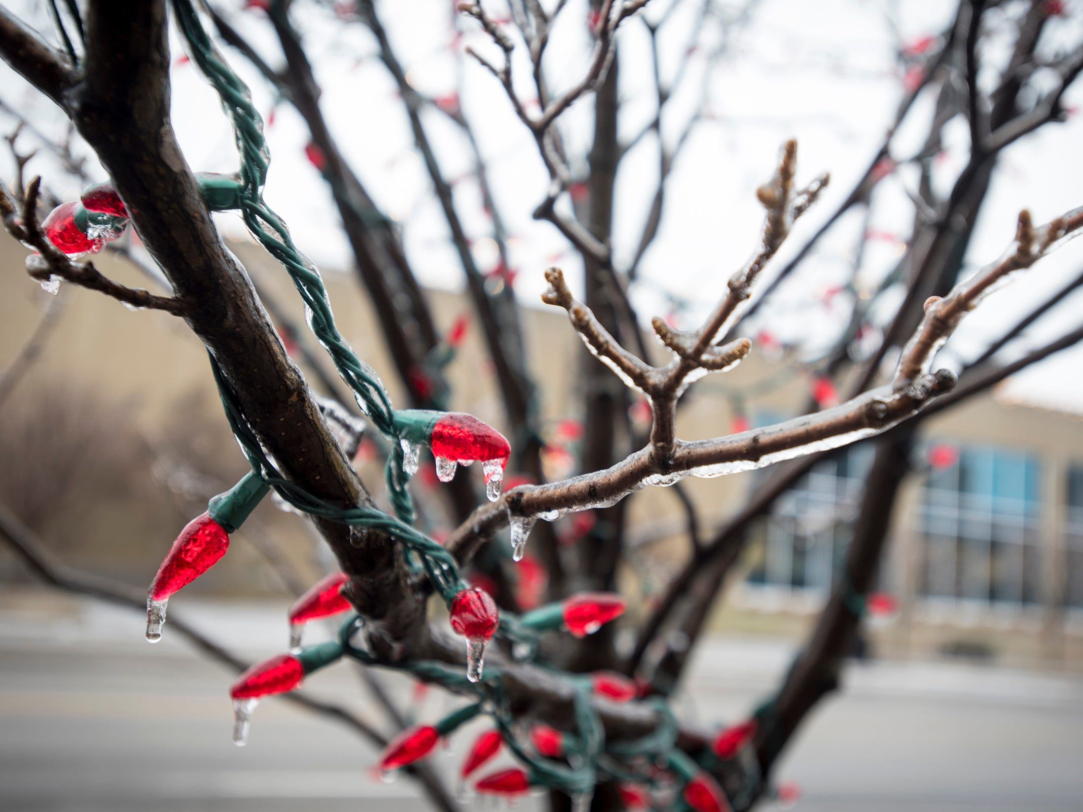 Ice coats a tree branch Wednesday, Feb. 6, 2019 in downtown Port Huron. Overnight saw sleet and icing, according to the National Weather Service and freezing rain could continue periodically throughout the day.