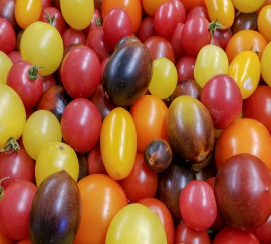 Dayton Valley Aquaponics grows several varieties of cherry tomato. The farm also grows slicing tomatoes, chilis and cucumbers for the Northern Nevada market.