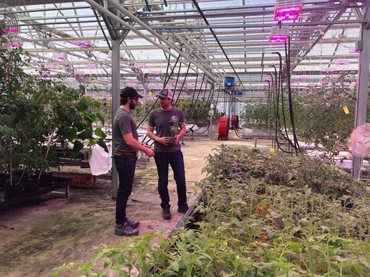 Trevor Birba, left, business manager for Dayton Valleqy Aquaponics, and Mark Warrell, production manager, discuss the status of their tilaipa and produce crops at the farm in the desert outside Dayton, Nev.