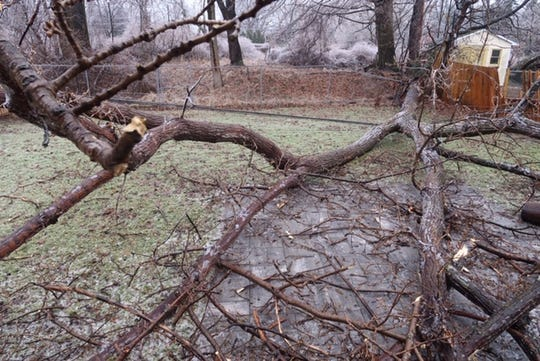 This tree took down wires and crashed into the living room of a home on Norcrest Drive in Irondequoit during Wednesday's ice storm.
