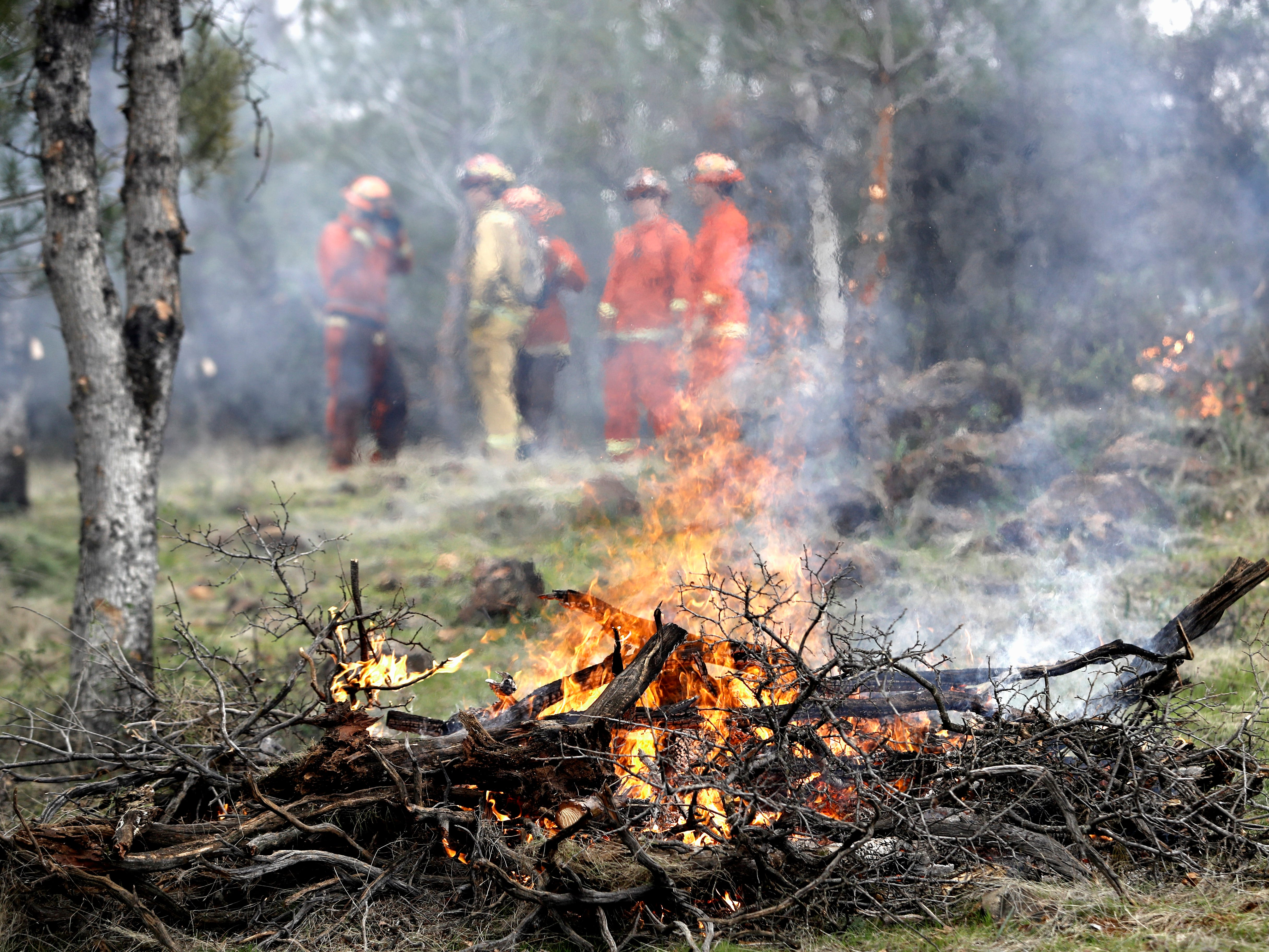 A crew from the Sugar Pine Conservation Camp burns brush and tree limbs to create a defensible space at a city-owned greenbelt between El Capitan Drive and Regent Avenue in west Redding on Feb. 6, 2019.