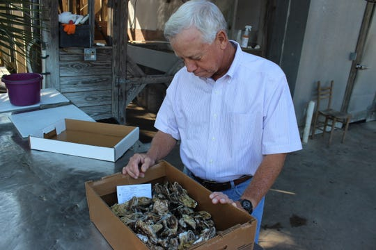 Leo Lovell looks over one of the first boxes of farmed oysters he produced back in 2013.