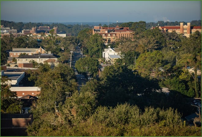 A view of Tallahassee's urban forest.