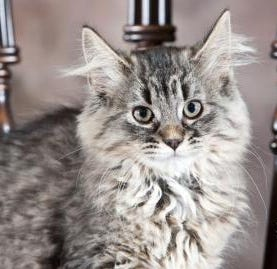 Fuzzball, pretty much the most 'purrfect' feline around | Marathon County Pet of the Week