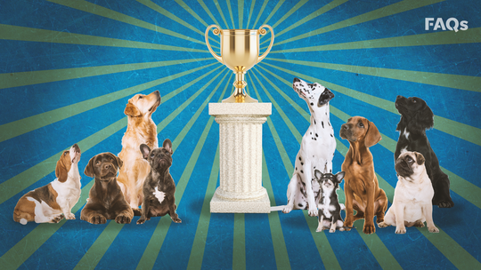 Westminster Dog Show 2020: What to know about 144th annual canine competition