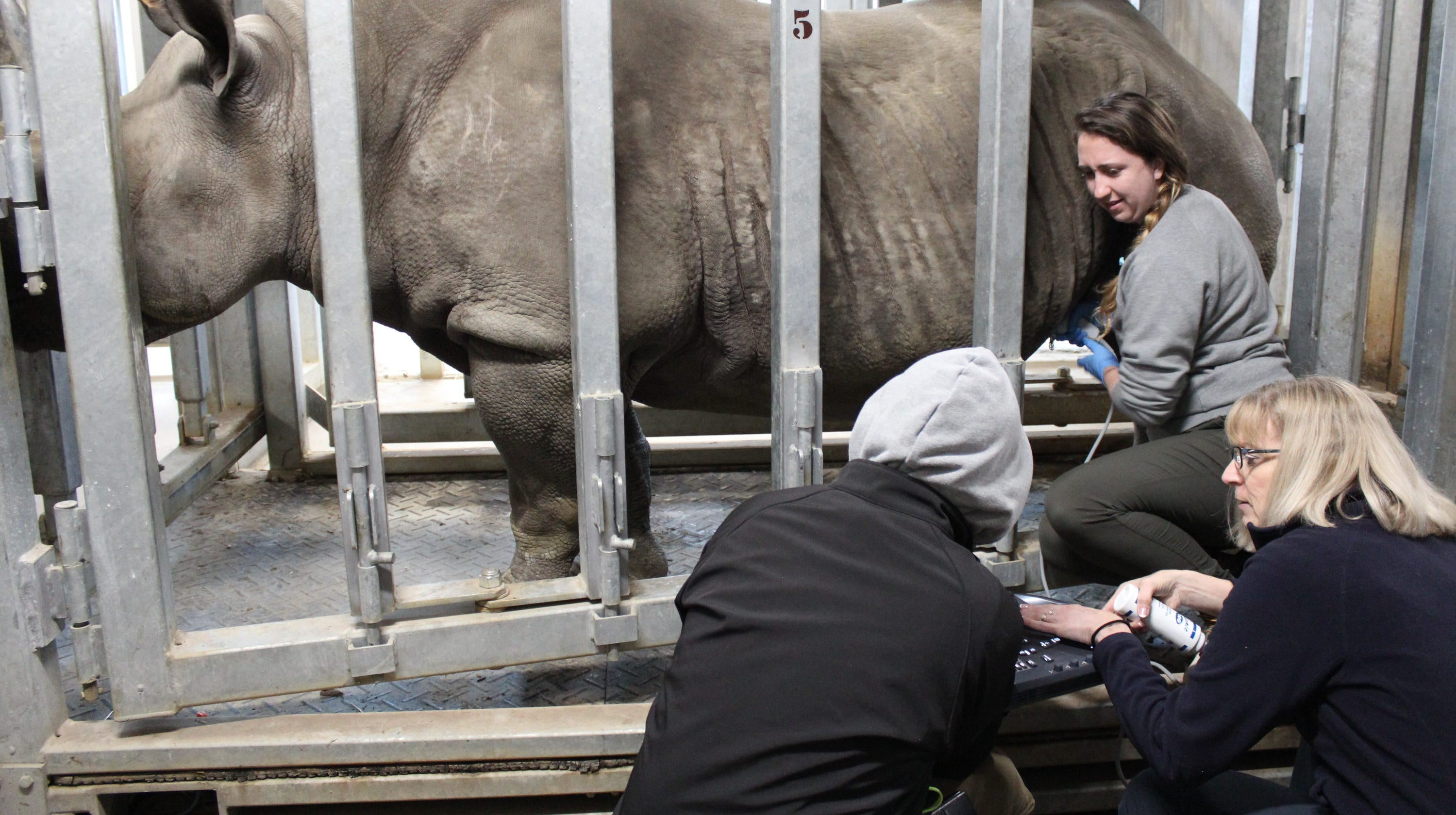 Blank Park Zoo's eastern black rhinos are expecting their second baby