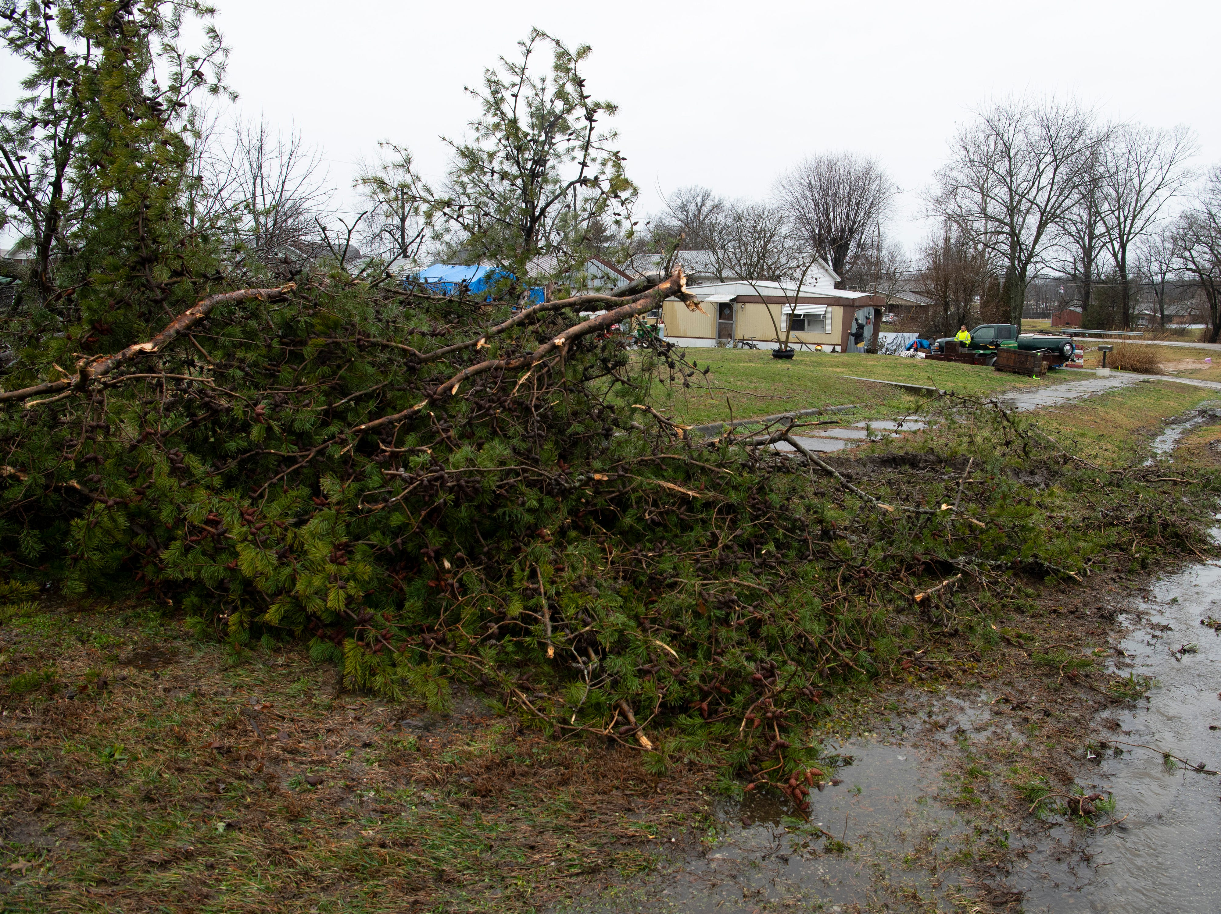 Tracy Tinsley of Oakland City, Ind., was awakened from her sleep by a storm which downed two of their trees Thursday morning. She and her husband, Jeff, don't know whether it was a tornado or just strong winds, but the storm left most of their plastic riding toys parked perfectly in line while demolishing the massive black walnut and pine trees.