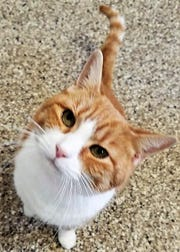 Lois is a cat at Humane Society of Sandusky County and she needs a home.