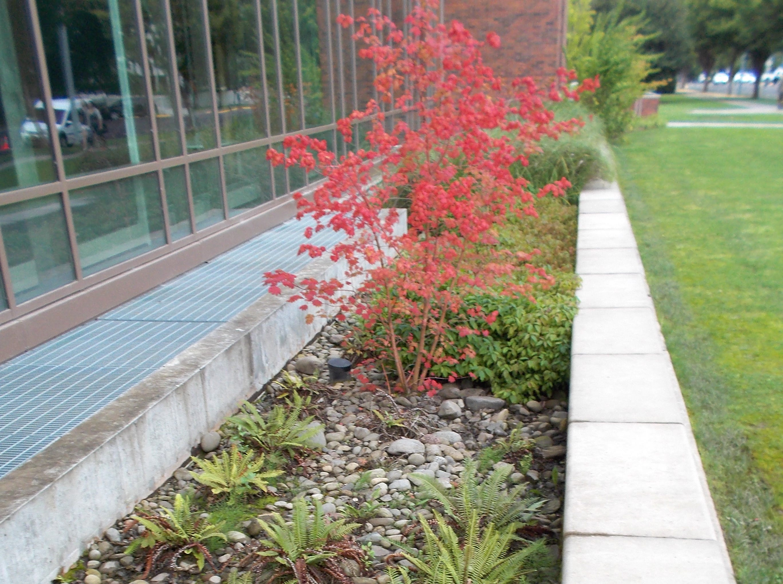 Stormwater filtration planters at Willamette University's Ford Hall are examples of the type of on-site stormwater retention projects that would be required of developers in smaller cities under the new permit.