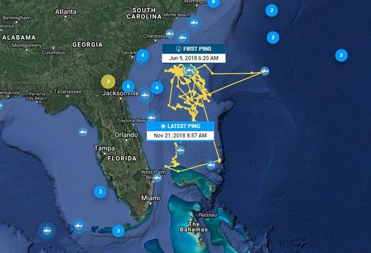 Tiger shark DeMott prefers the water off North Florida, but he recently visited offshore of the Treasure Coast in September.