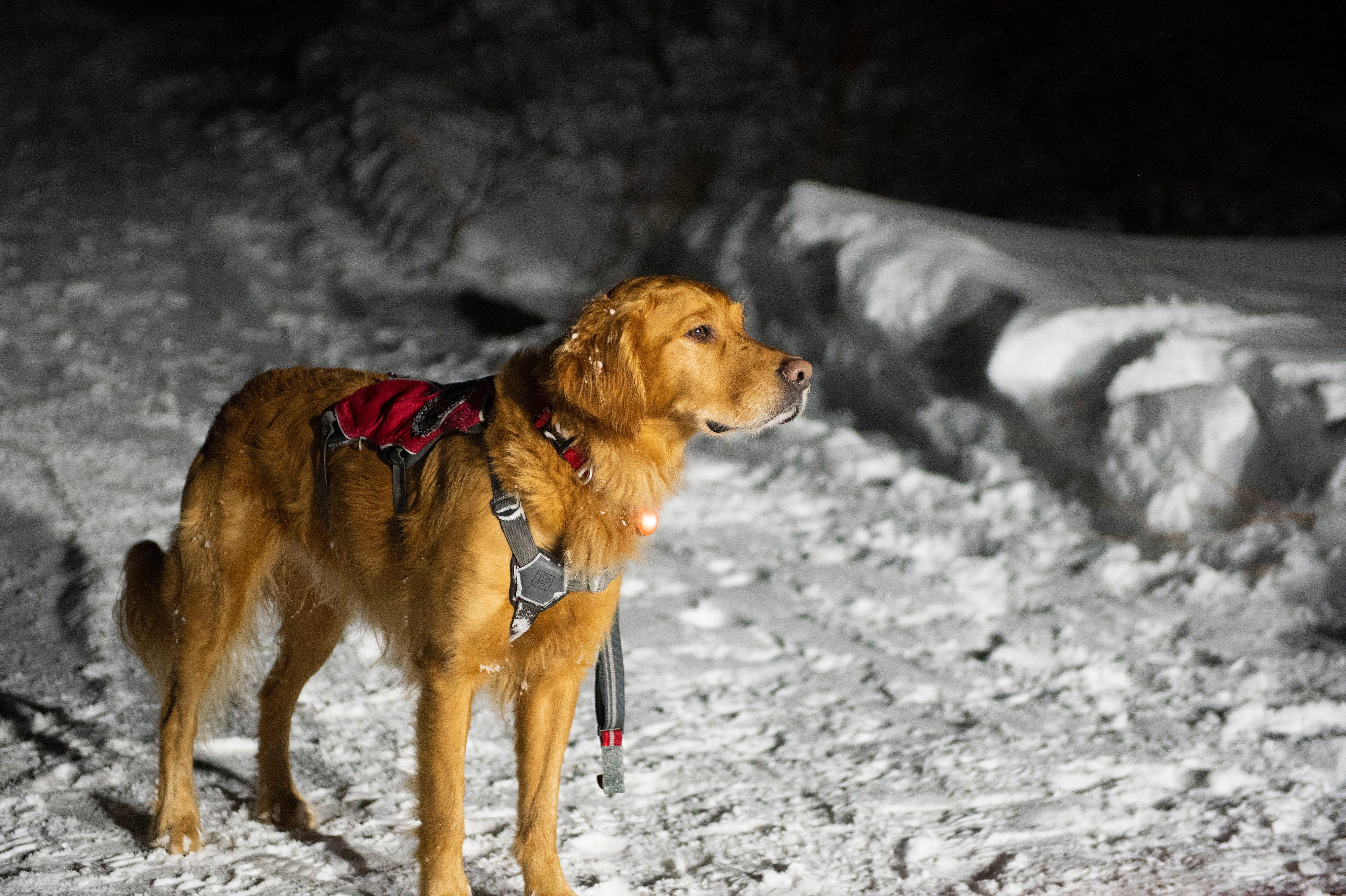 Avalanche rescue dog school in Utah prepares pups to save lives