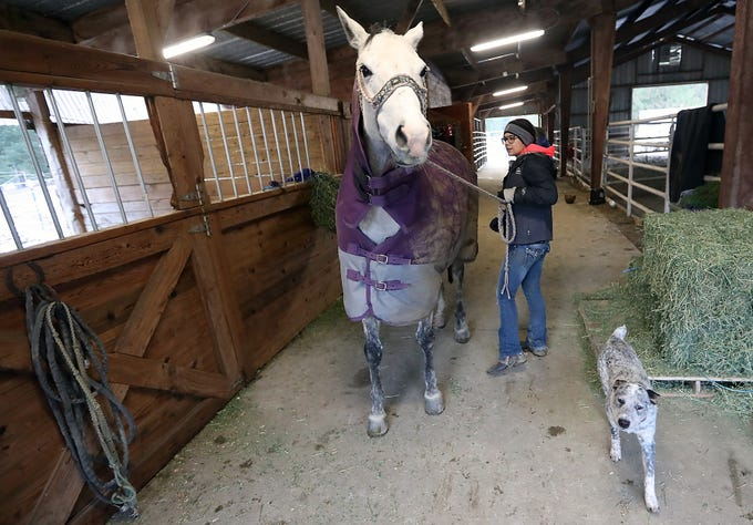 Teresa Morrell leads her horse Cali out of her stall as she gets ready to work with her at the ARD Ranch in Silverdale on Thursday, February 7, 2019. Morrell is a competitive barrel racer and will compete at RFD-TVs Million Dollar Rodeo in Fort Worth, Texas at the end of February.