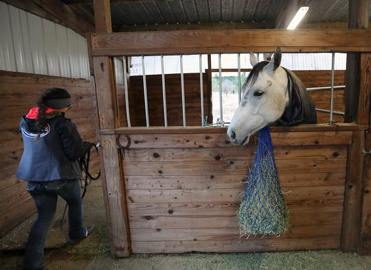 Pearl looks on as Teresa Morrell enters her stall at the ARD Ranch in Silverdale on Thursday, February 7, 2019.
