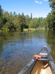 On the Au Sable River east of Grayling, your canoe may be the only one for miles on a Thursday in September.