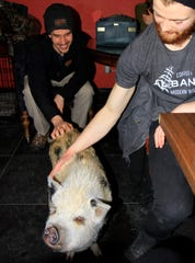 """""""Charlie the Pig"""" spent most of his time at KellerGeist being pet and fed by admiring customers."""
