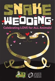 A snake wedding will be held at Lafayette Science Museum.