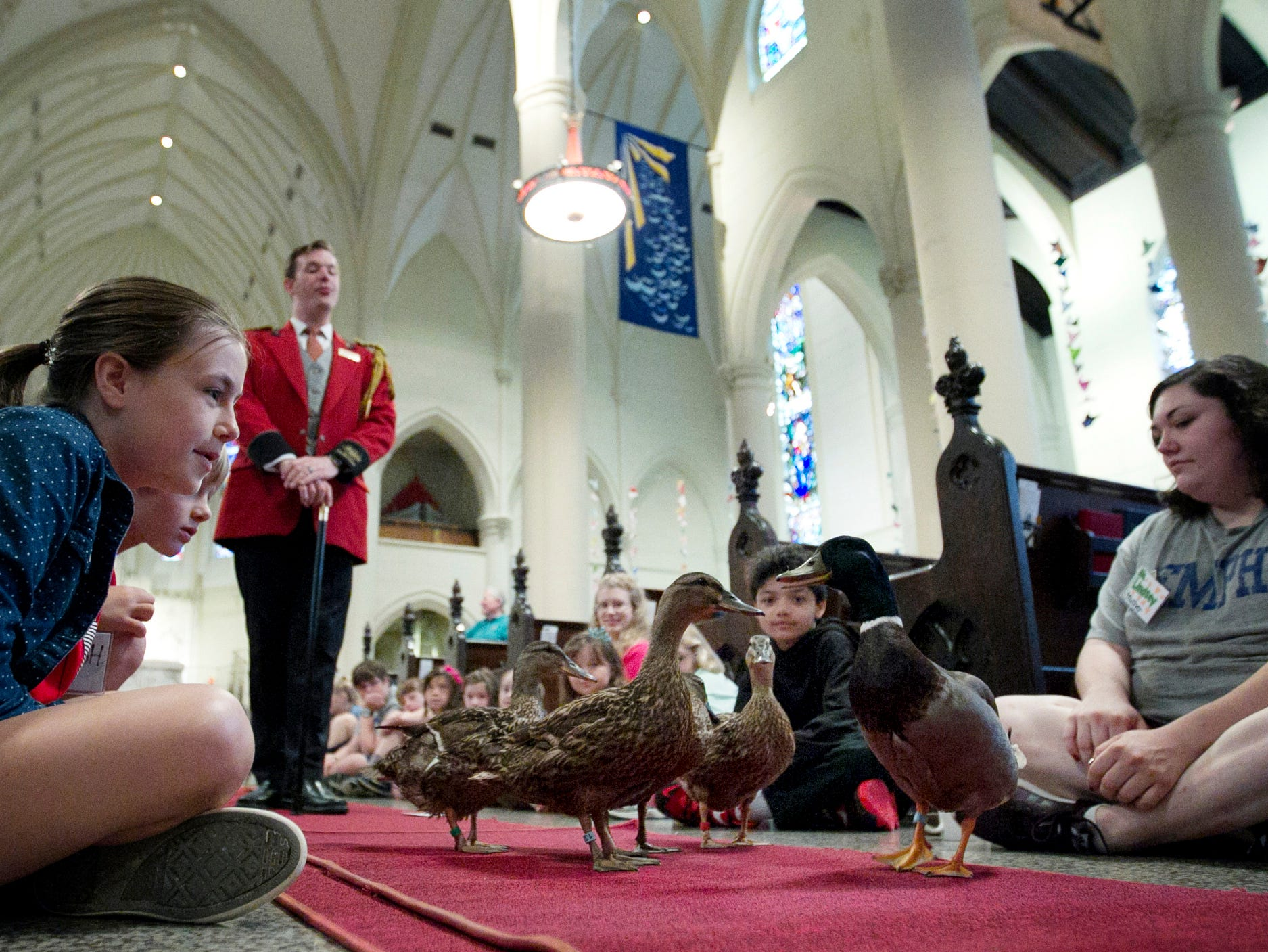 Hayden Hedges, 10, left, and other students at the St. Mary's Summer Day Camp watch as Peabody Hotel Duckmaster Anthony Petrina marches the ducks through St. Mary's Episcopal Cathedral on June 2, 2015. The camp is focusing on Memphis history and had Petrina and his famous water fowl visit with the kids before giving a brief history lesson on the Peabody and its ducks before they made their morning debut in the hotel's lobby.