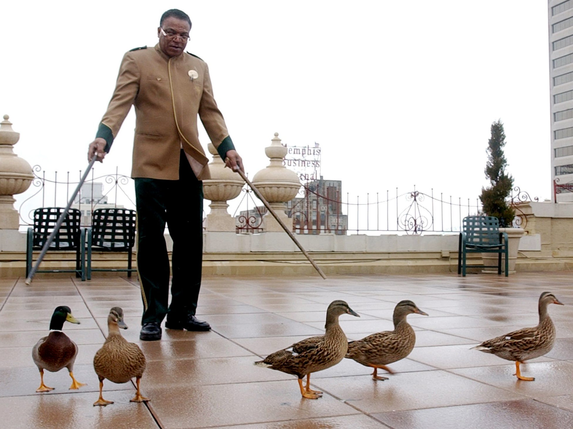 Charles Blevins escorts the Peabody ducks from their duck palace to the lobby of the Peabody Hotel on Jan. 16, 2003.