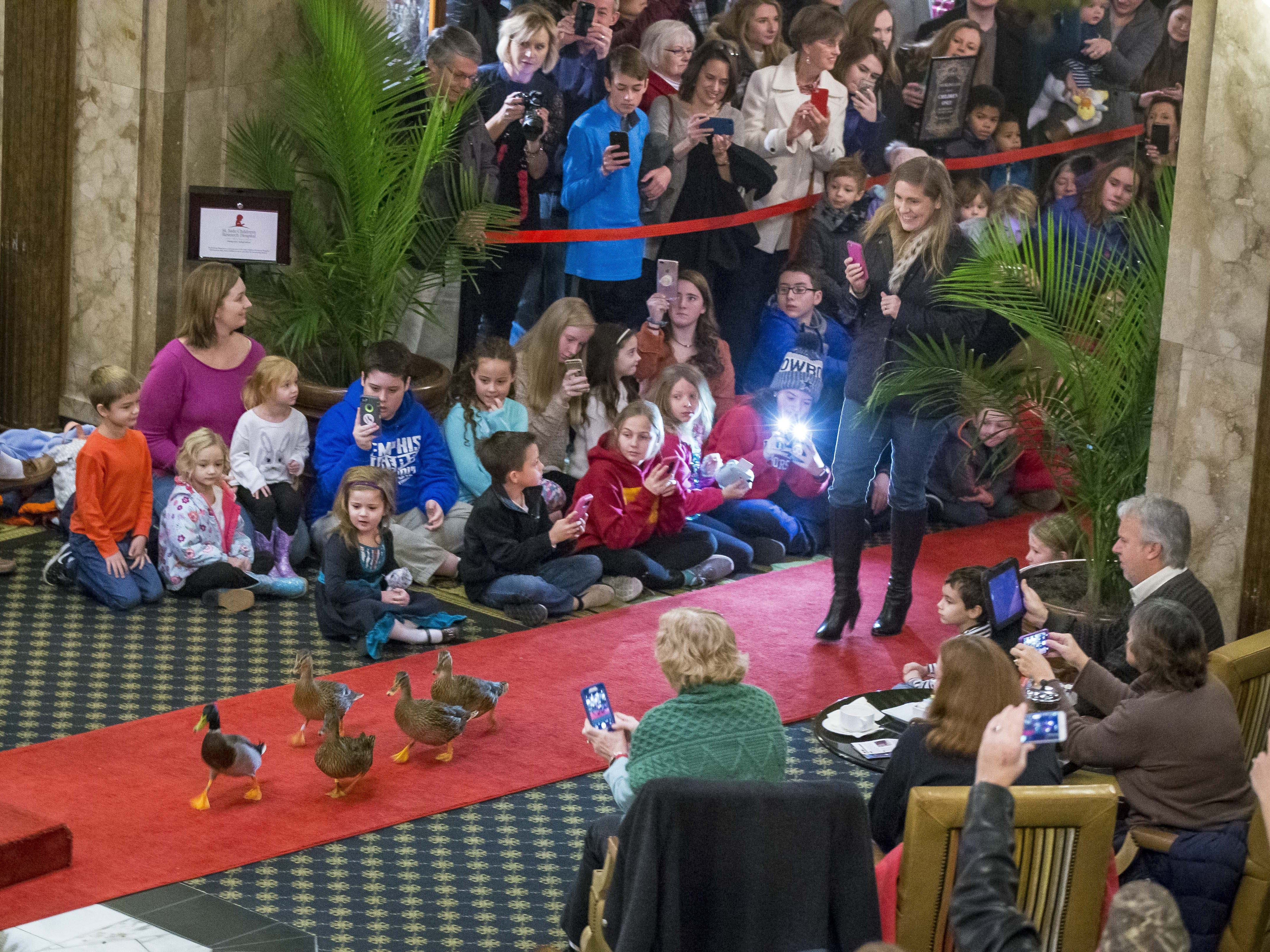 Iowa Cyclone fans and others watch the Peabody Ducks stroll into the lobby of the Peabody Hotel in Memphis on Dec. 28, 2017. The ducks have marched through the hotel since the 1930s.