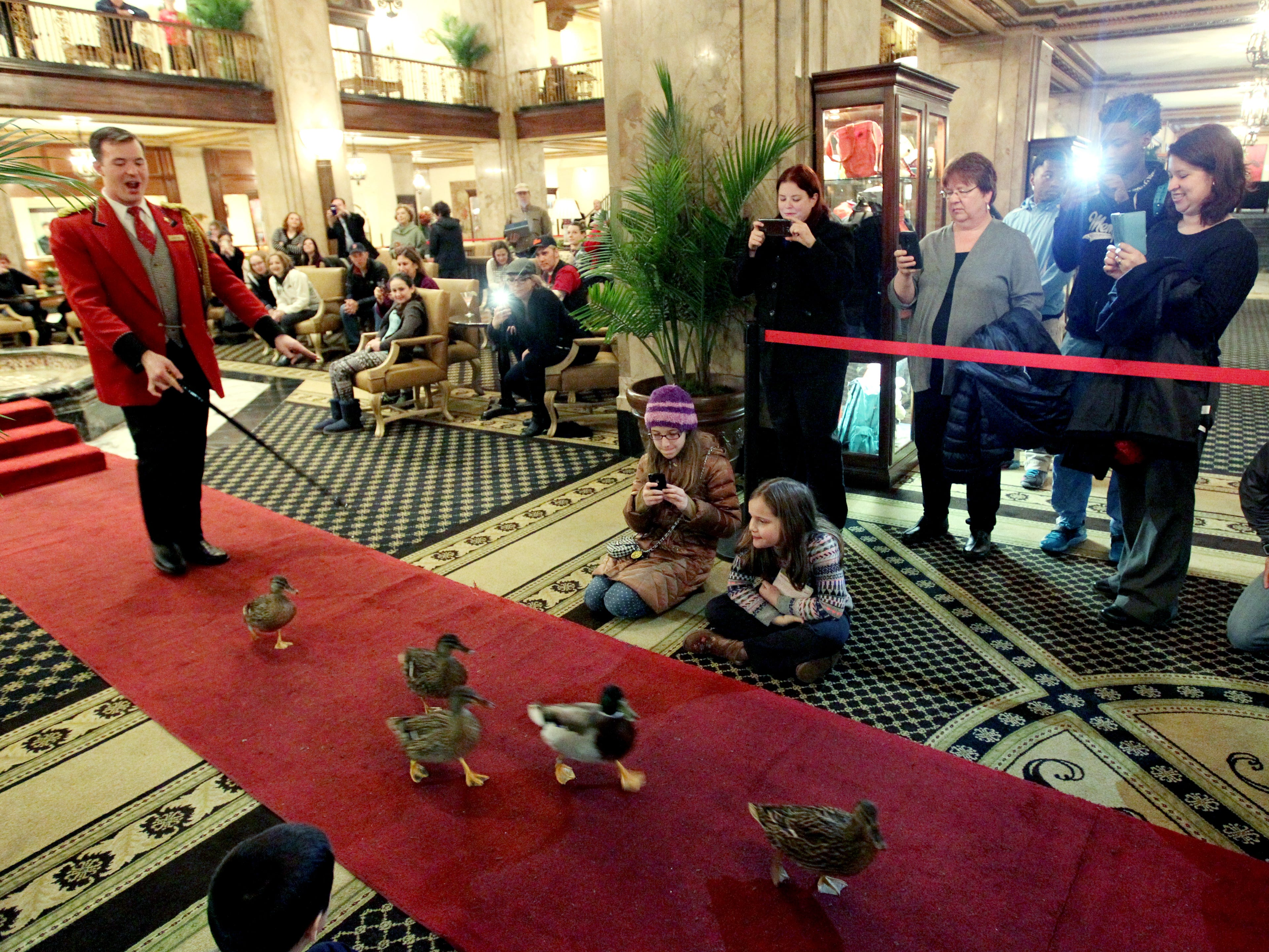 Hotel guests line up for the march of the Peabody Ducks at the Peabody Hotel on Feb. 16, 2015. Memphis area hotels had the highest occupancy rate in more the 25 years in 2014.