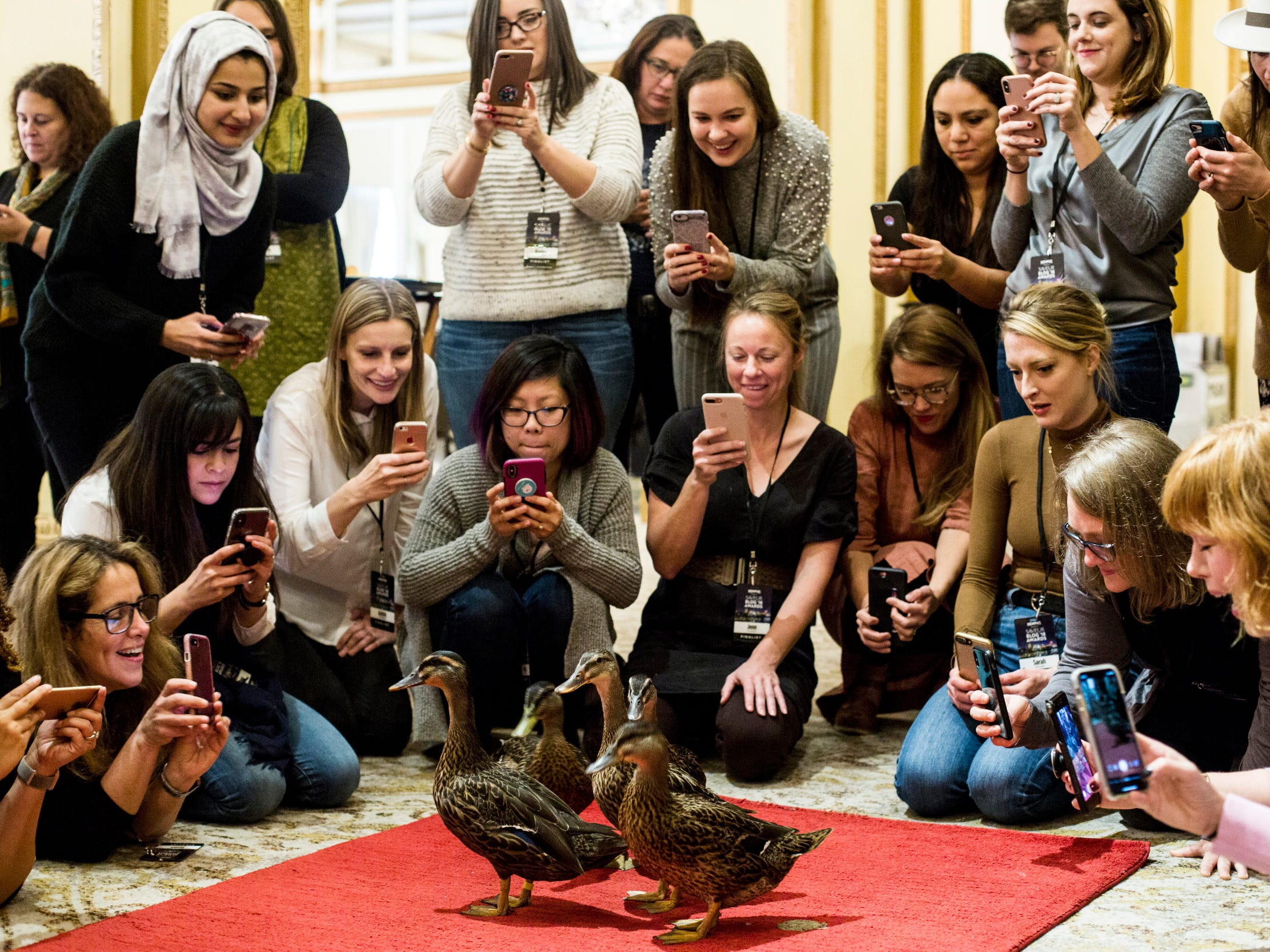 Saveur Blog Award finalists and guests gather around the red carpet during a private Peabody duck march inside of the Peabody Hotel on Nov. 11, 2018.
