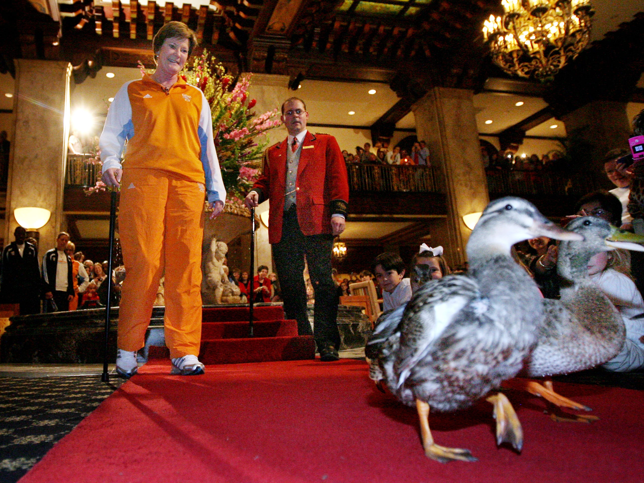 Tennessee head coach Pat Summitt acts as honorary duckmaster and helps wrangle the ducks up to their roost atop the Peabody Hotel in Memphis on March 26, 2010.