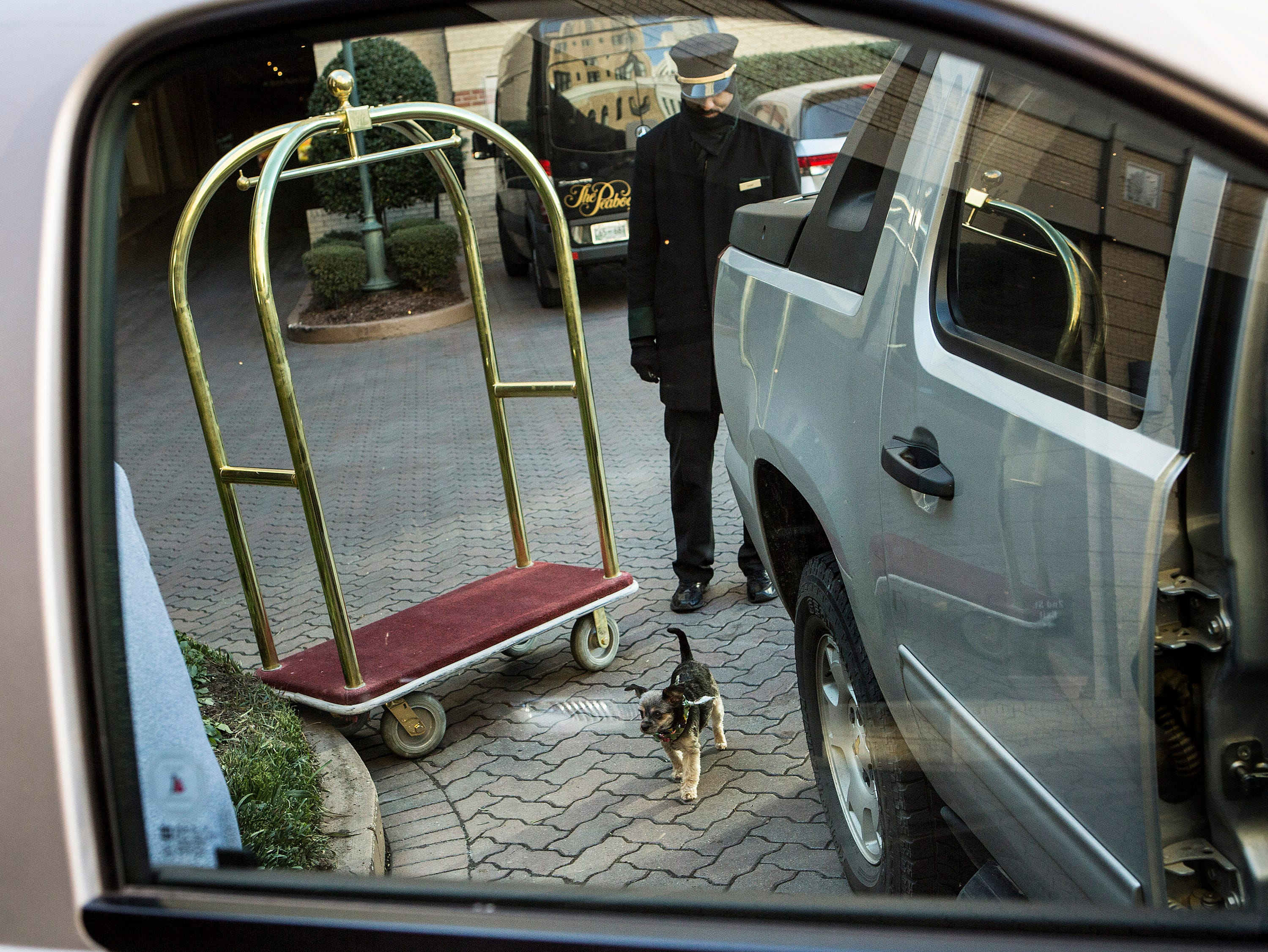 """The 4-year-old dog that was stolen on Jan. 7 from the Canadian couple visiting Memphis for the Elvis Presley birthday festivities, arrived at The Peabody Hotel on Nov. 16, 2015, with its owners, Terry and Lorie Traviss. The couple drove nine hours to reclaim Dixie. """"I'm so happy,"""" Lorie Traviss said about the reunion. """"She does look more like a boy now though,"""" she said about the haircut the dog was given by the robbers to try and disguise the dog."""