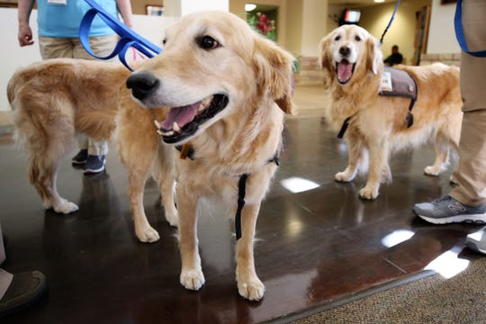 Therapy Dogs Karma, left, and Honey, right, gather in the lobby of San Juan Regional Medical Center Friday after posing for a photo. The Therapy Pet program received an award during the 13th Annual Behavioral Health Day at the Legislature.