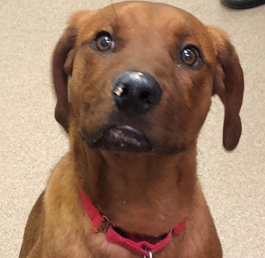 Copper is an outgoing dog that loves other canines, cats and especially people. Visit Copper at the Oshkosh Area Humane Society.