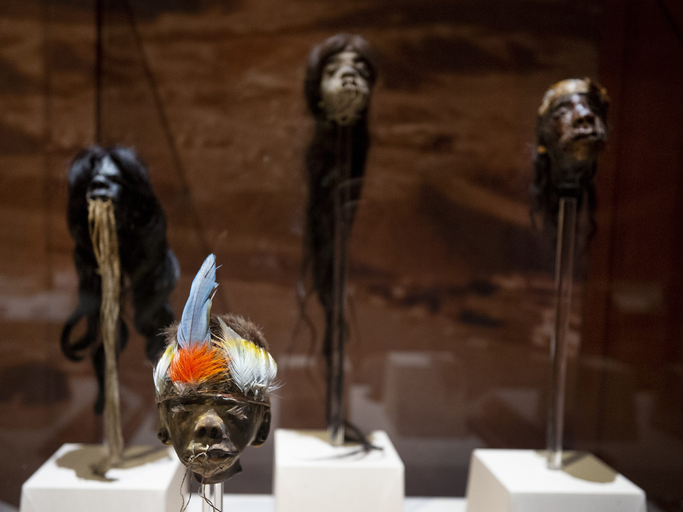 Mummies of the World: The Exhibition displays shrunken heads at the Arizona Science Center. The exhibit includes mummies from Egypt, Europe and the U.S. and is open to the public from Feb. 10 through Sept. 2, 2019.