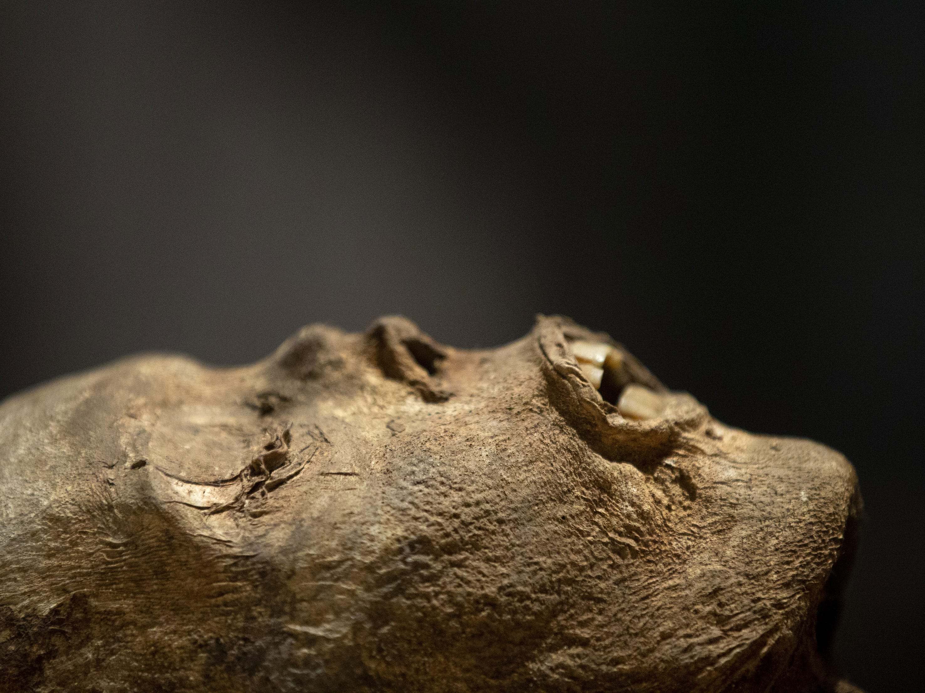 Mummies of the World: The Exhibition displays Baron von Holz at the Arizona Science Center. He is a naturally preserved mummy found at Sommersdorf Castle. The exhibit includes mummies from Egypt, Europe and the U.S. and is open to the public through Sept. 2, 2019.