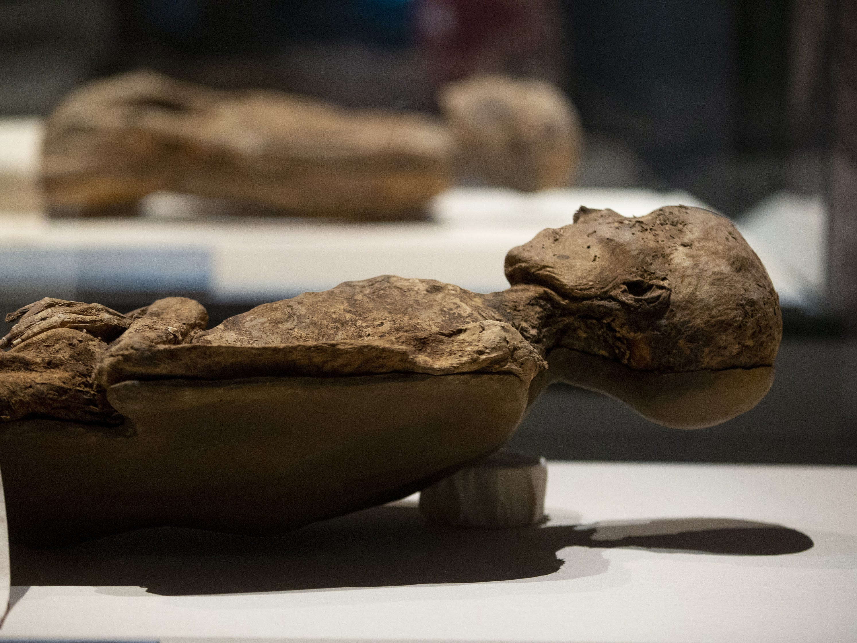 Baroness Schenck vo Geiern is displayed in the Mummies of the World: The Exhibition at the Arizona Science Center. She is a naturally preserved mummy found at Sommersdorf Castle.  The exhibit is open to the public from Feb. 10 through Sept. 2, 2019, and includes mummies from Egypt, Europe and the U.S.