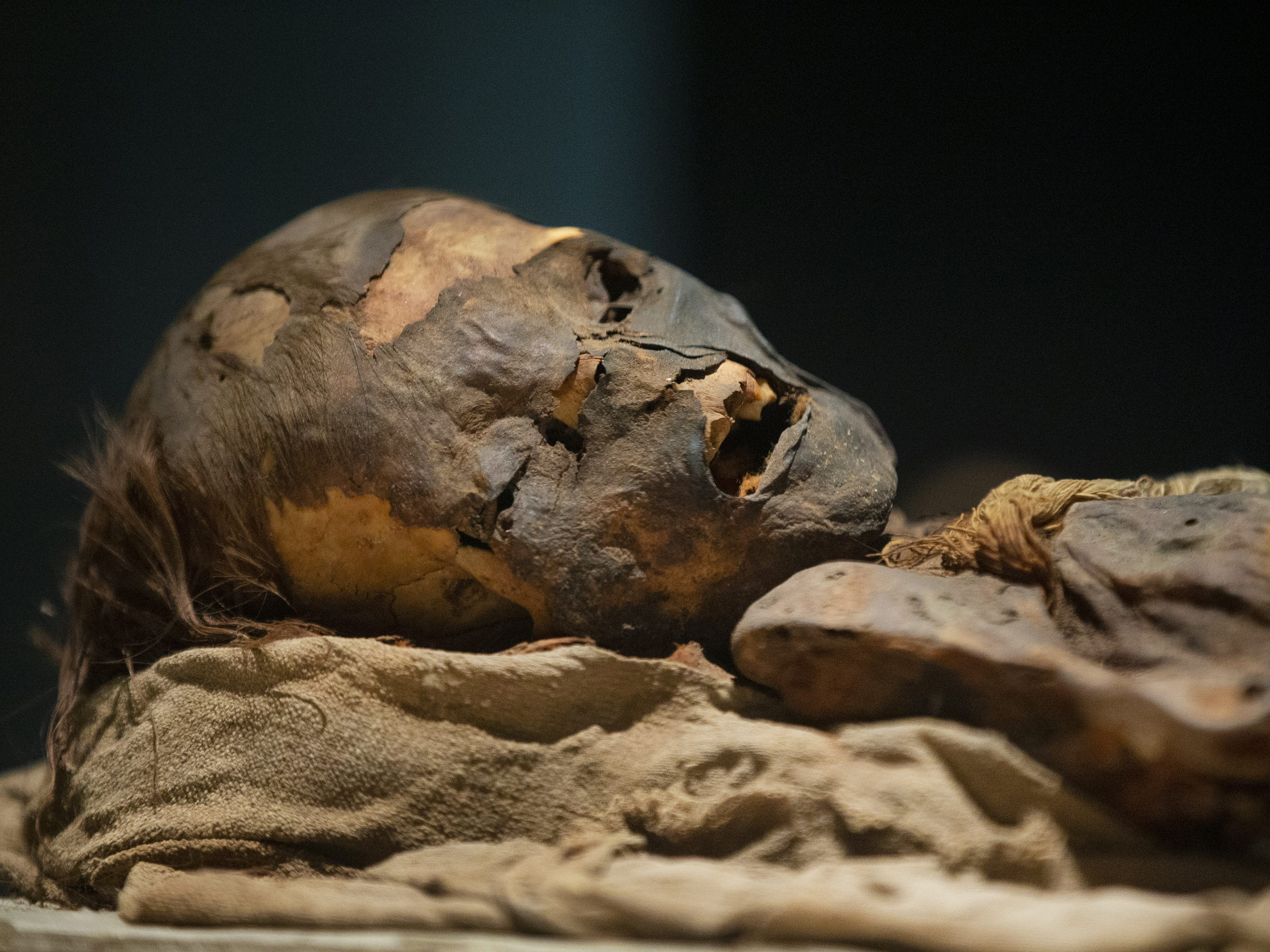 Mummies of the World: The Exhibition displays a child from South America who was naturally preserved in the hot and dry environment. The exhibit at the Arizona Science Center includes mummies from Egypt, Europe and the U.S. and is open to the public from Feb. 10 through Sept. 2, 2019.