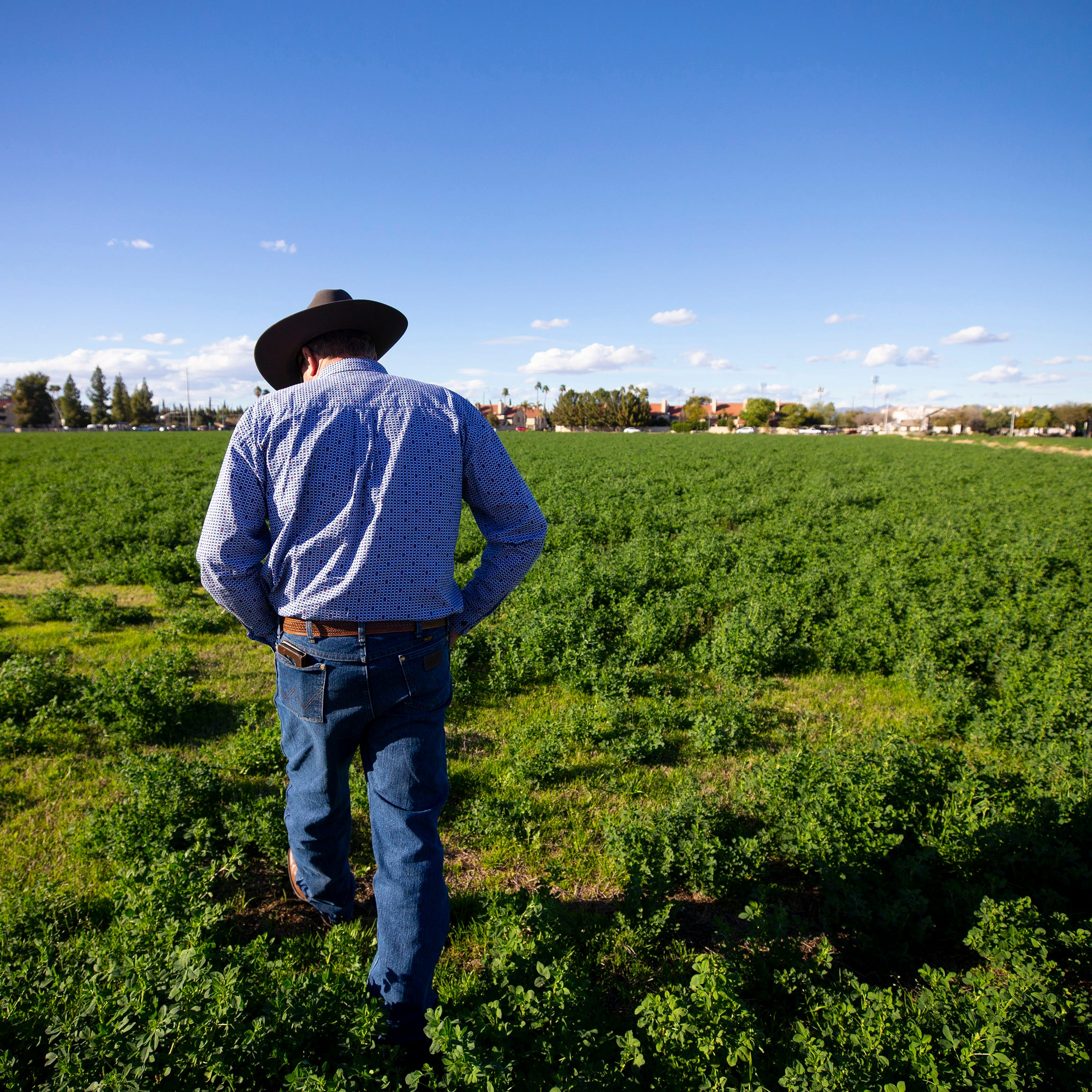 Family farms made Phoenix livable, so why are so many going away?