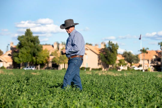 Mesa Vice Mayor Mark Freeman talks about urban farming while walking through his alfalfa crop at Freeman Farms in Mesa.
