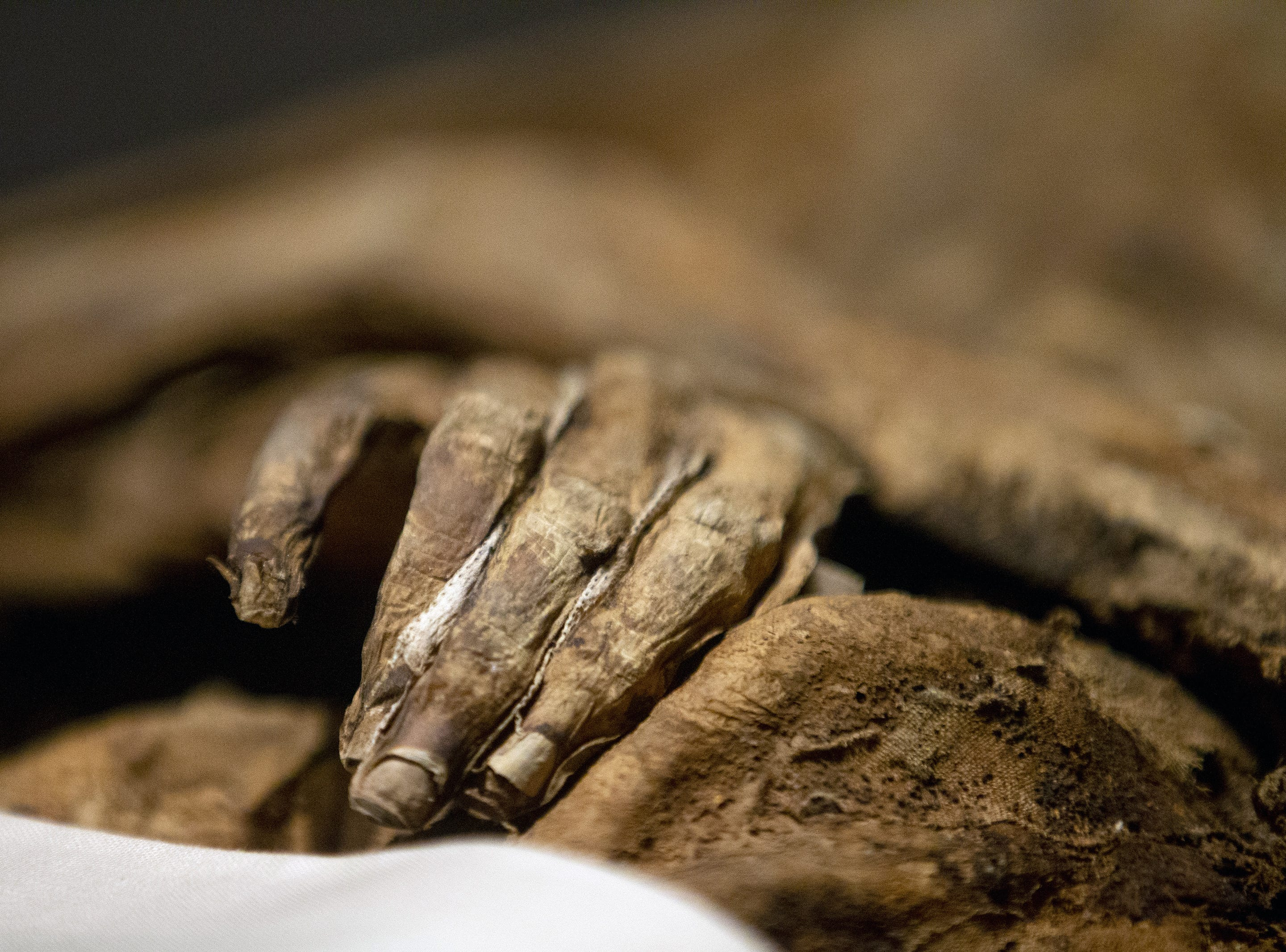 Mummies of the World: The Exhibition displays Baroness Schenck vo Geiern at the Arizona Science Center. She is a naturally preserved mummy found at Sommersdorf Castle. The exhibit includes mummies from Egypt, Europe and the U.S. and is open to the public from Feb. 10 through Sept. 2, 2019.