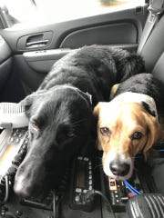 Two dogs were rescued Thursday afternoon after they were stuck in ice over the Hudson River as seen on Feb. 7, 2019.