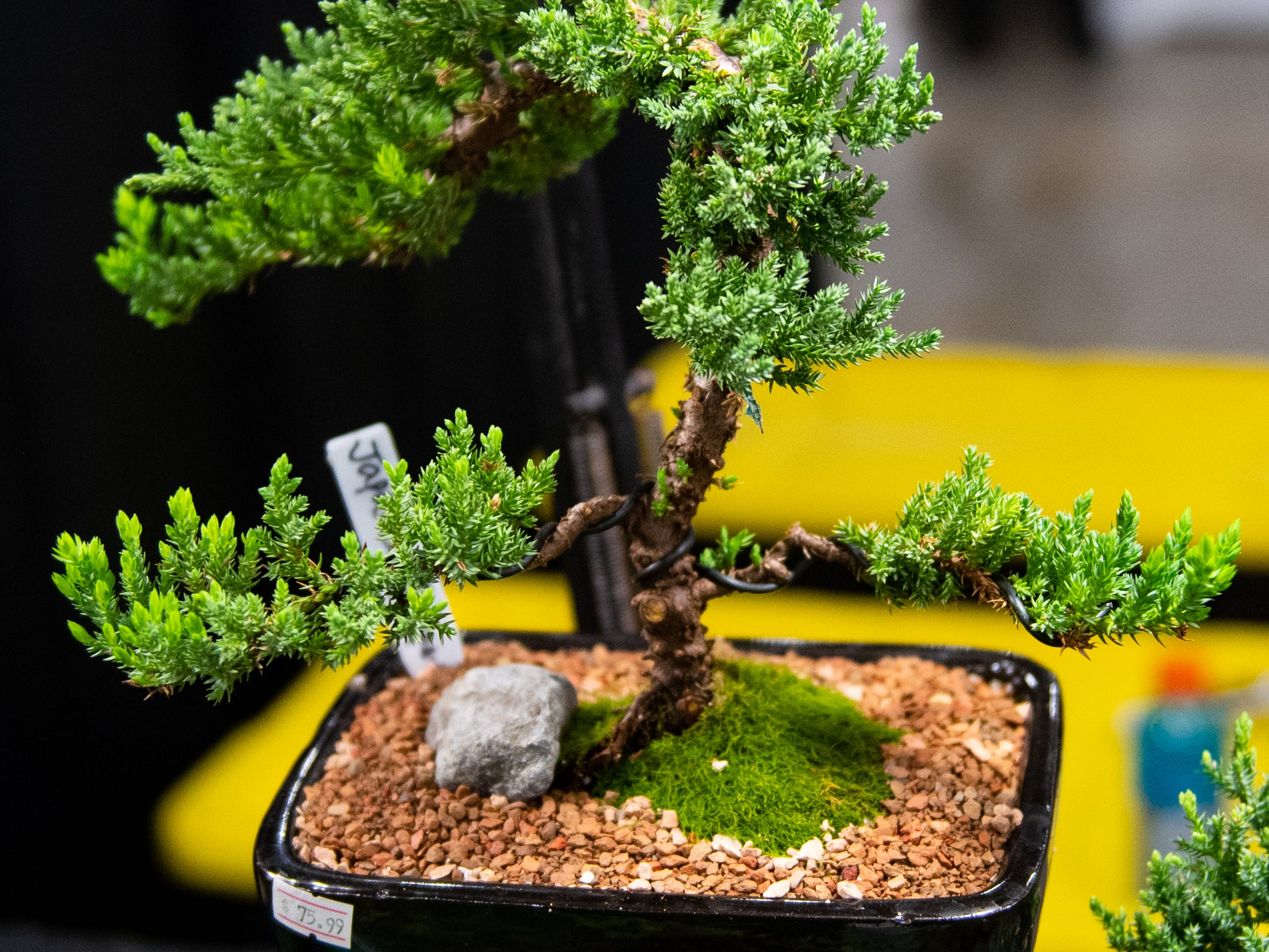 Bonzai trees of all shapes and sizes are on sale at the 2019 Home & Garden Show, February 8, 2019.