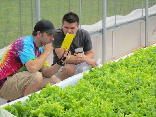 UW-Stevens Point hopes to develop a degree program in aquaponics/aquaculture. Shown here are students at the Aquaponics Innovation Center, where lettuce and other plants are grown without soil.