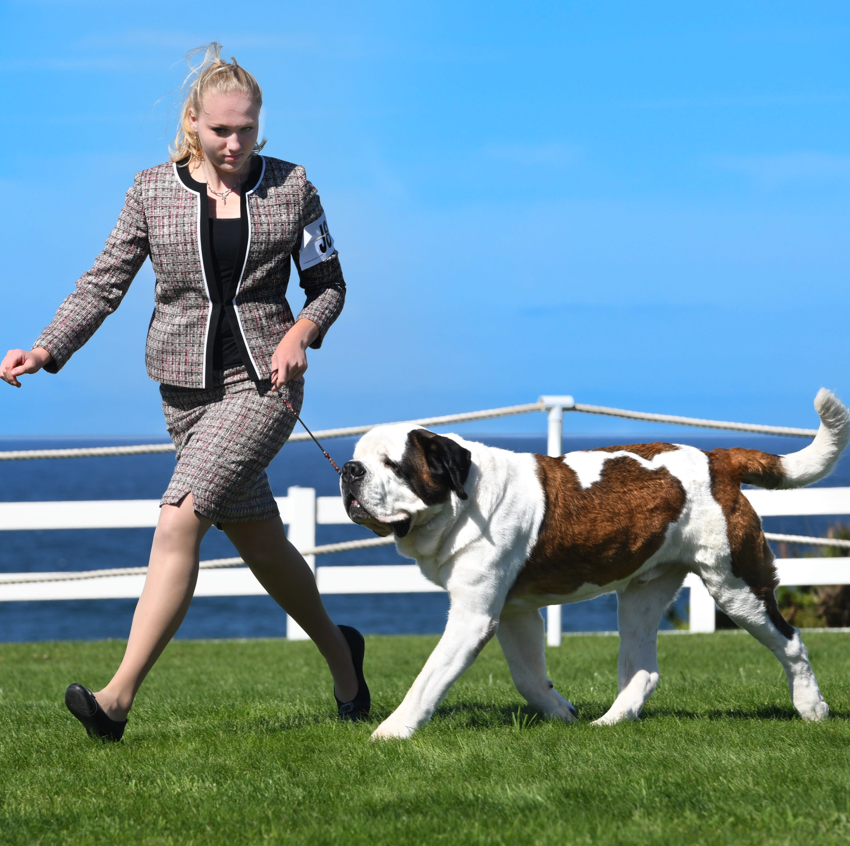Westminster Kennel Club Dog Show: Plainfield teen and her Saint Bernard to compete