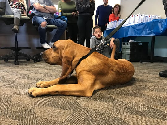 K9 Bandit, a blood hound with the Jupiter Police Department, visited AT&T's Global Legal Demand Center in North Palm Beach on Take Your Child to Work Day.